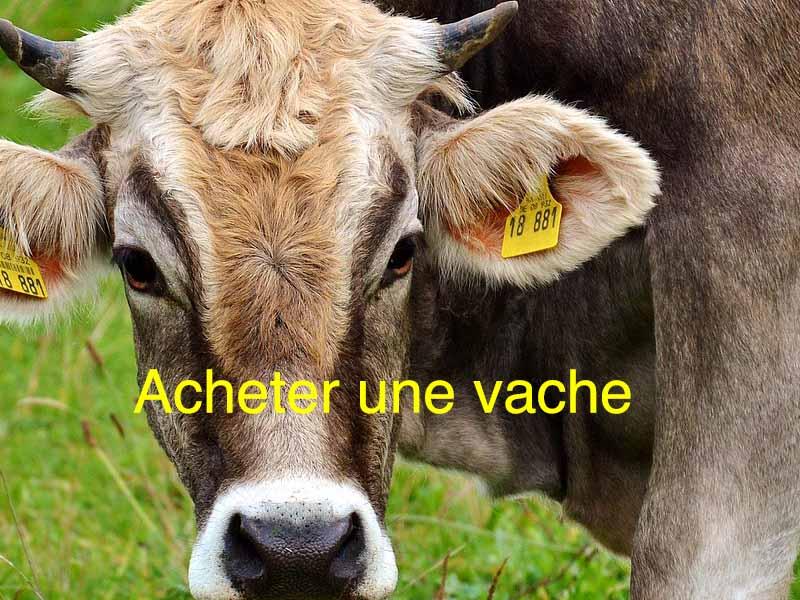 acheter une vache