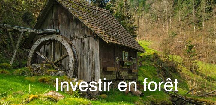 Investir dans une forêt protéger son patrimoine ou gagner plus?